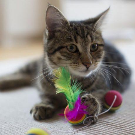 Mimzzz the CAT…
